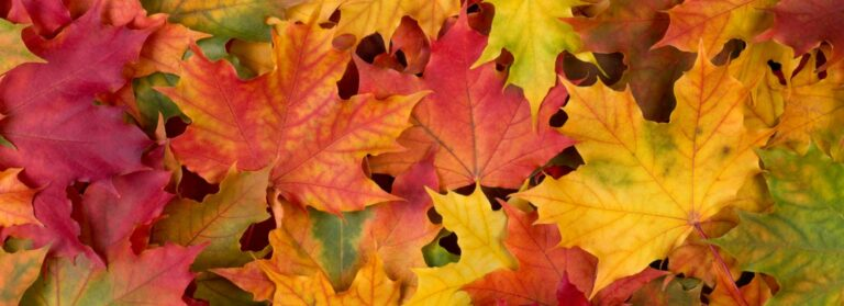 Don't Let Falling Leaves Destroy Your Roof This Fall