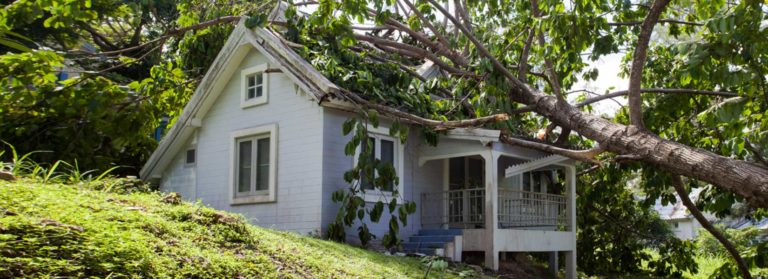 When A Tree Causes Roof Damage
