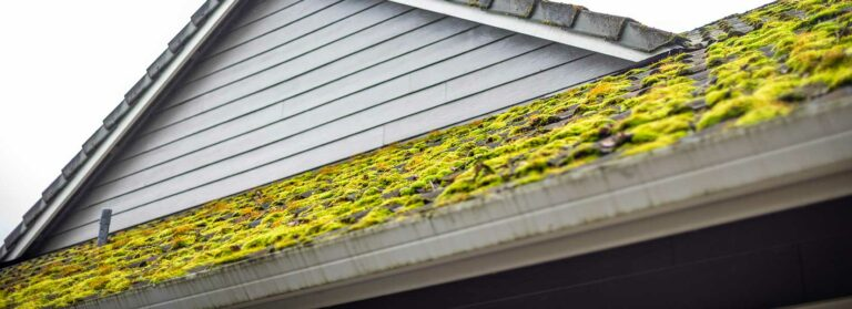 Moss covered the shingle roof