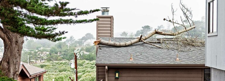 Branch Falls on Your Roof